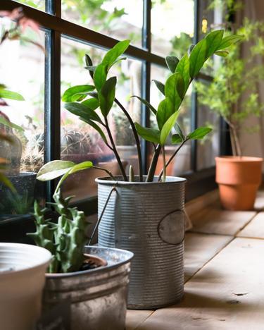 Klima Psyche Wohlbefinden Wie Zimmerpflanzen Unser Leben Beeinflussen